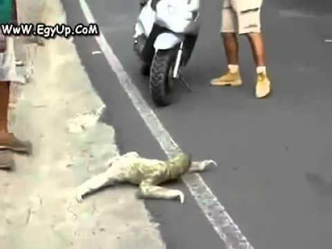 Animal Etrange Traverse La Route Youtube