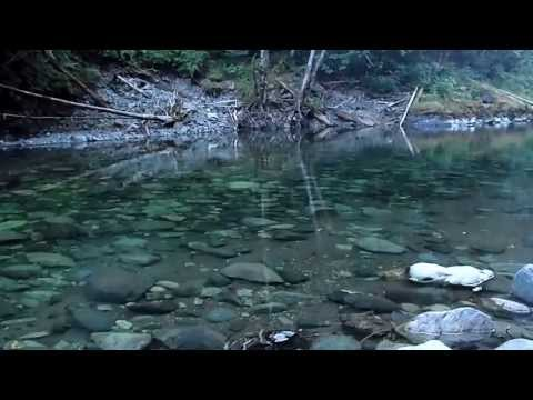 Aug 2012 Steelhead Fishing - As Good As it Gets