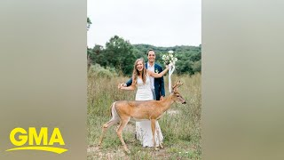 'Til deer doe us part: Deer photo-bombs wedding photos l GMA Digital