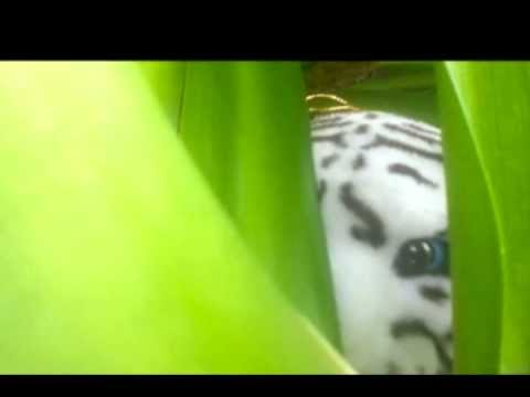 Tiger Farm Documentary FINAL