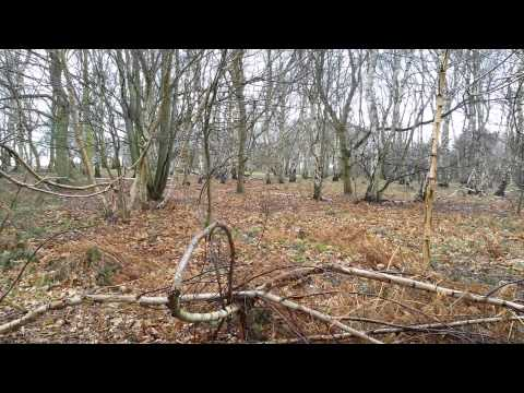British Bigfoot Research - Sherwood Forest visit (March 1, 2015)