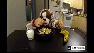 FUNNY ANIMALS CAUGHT ON CAM DOING WEIRD THINGS 2019   FUNNY ANIMALS COMPILATION