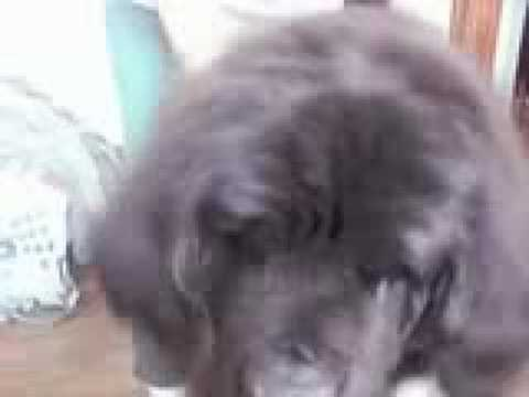 Newfy Massage Parlor Video