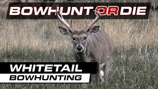 Bowhunting Deer - Awesome Whitetail Doe With A Bow