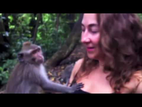 Pervert monkey grabs girl boobs