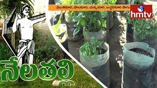 Fresh Ideas for Growing Vegetables in Waste Water Can's | Nela Talli