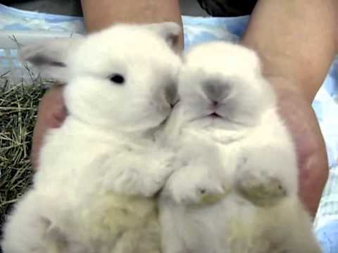 Cute White Baby Rabbits Cute White Baby Bunnies