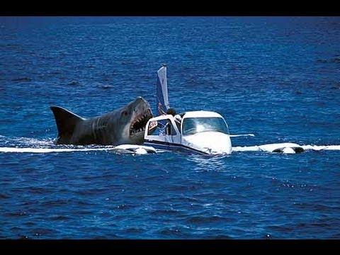Megalodon Shark Attack Caught On Camera Attacking Crash Air Plane Off