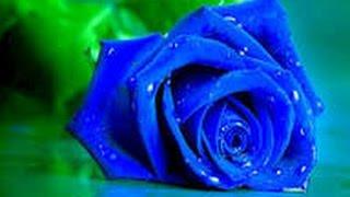 Download ইলিশের রাজধানীর চমৎকার একটি গান... না দেখলে চরম মিস করবেন .... 3Gp Mp4