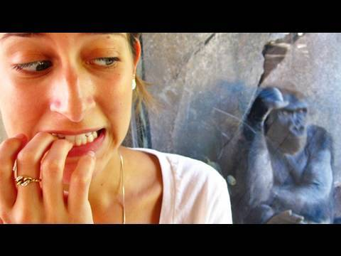 Girl Attacked By Gorilla! (10.12.09 - Day 165)