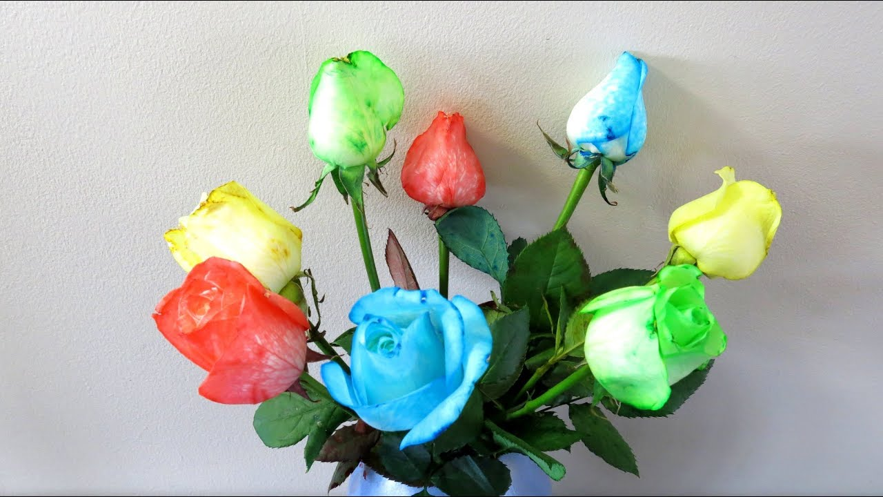 How to make rainbow coloured roses youtube for How to make multi colored flowers