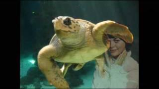 Watch Mireille Mathieu Kleine Schwalbe video