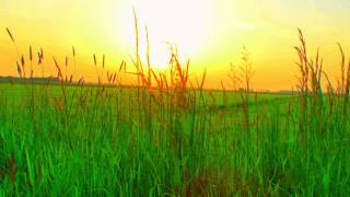 Watch Paul Baloche Christ The Lord video