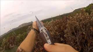 N°12 Chasse aux pigeons de migration en Corse du Sud / 2013-2014