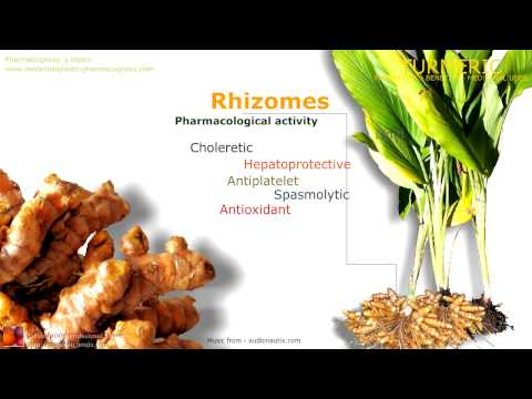 Turmeric benefits. Health benefits of turmeric rhizome.