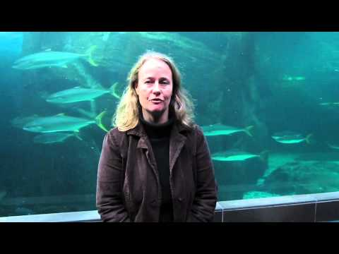 Sustainability at the 2012 International Aquarium Congress