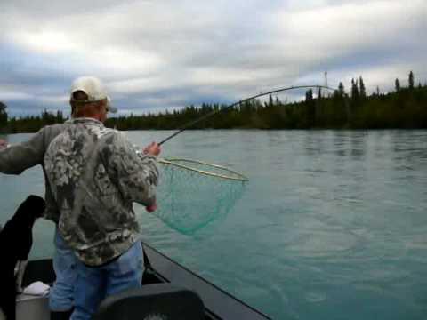 Silver salmon coho fishing kenai river alaska youtube for Kenai river fish counts
