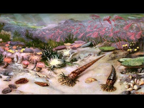Кембрийский период палеозойской эры (рассказывает палеонтолог Эрвин Лукшевич)