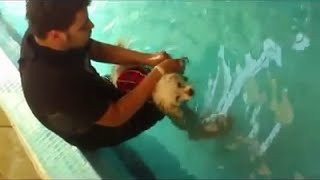 MOJO canine physical therapy & rehabilitation center in egypt العنايه بالكلاب فى مصر و التدريب