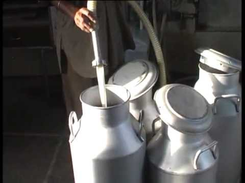 Dairy Farming in Punjab Punjab Dairy Farming in