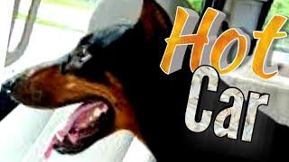 Doberman Vlog Leaving a Dog in the Car - Jogging Running