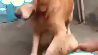 Funny videos Funny dogs 🐶