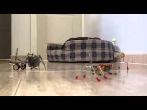 bots vs perro