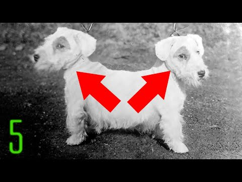 5 STRANGE (Two-Headed??) Dogs That Shouldn't Exist