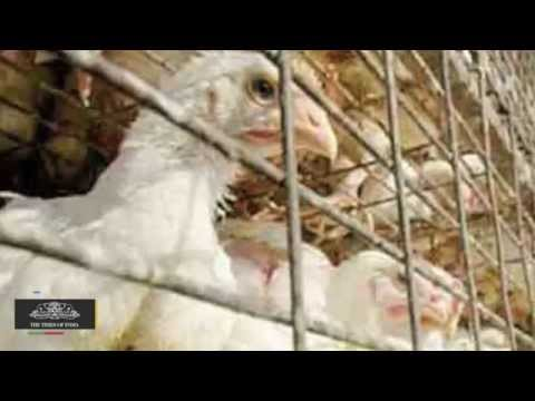 Bird Flu Fear Back in Hyderabad