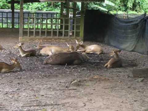 Zoo Melaka 28dec2009.wmv