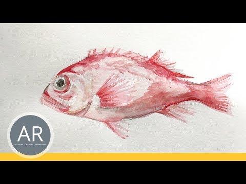 Tiere mit Aquarell zeichnen. Zeichenkurse. Beispiel Mappenkurs Kunst
