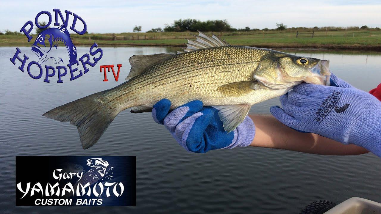 Top water bass fishing with gary yamamoto lures youtube for Top water bass fishing