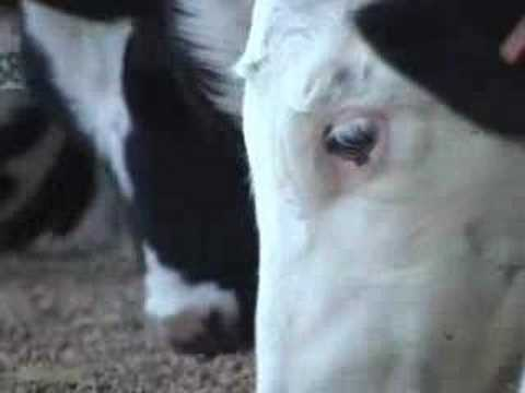 Dairy farm reinvents itself to survive