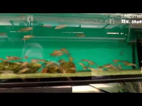 Czech Republic High quality Fish Selection visit Aquamania Blackburn