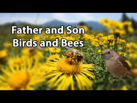 Father and Son: Birds and Bees
