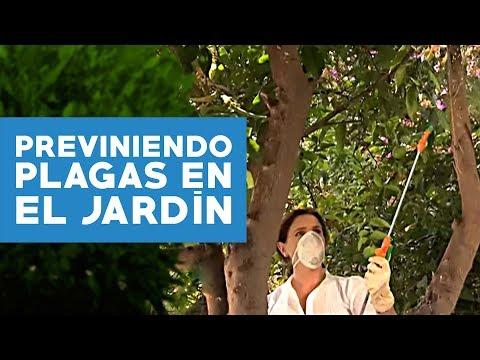 Limonero enfermo videolike for Como cuidar el pasto de mi jardin