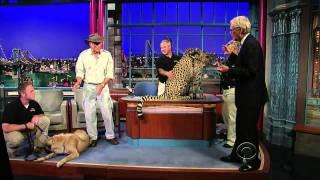 Anatolian Shepherd Dog protects the Cheetah from extinction..