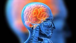digital story: the human brain