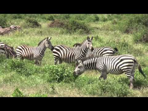 The wildlife in the Amboseli National Park (Kenya)