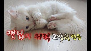 캣닙의 위력 고양이 반응이 재밌어요 Cat cat nip reaction 猫ケトニプ反応