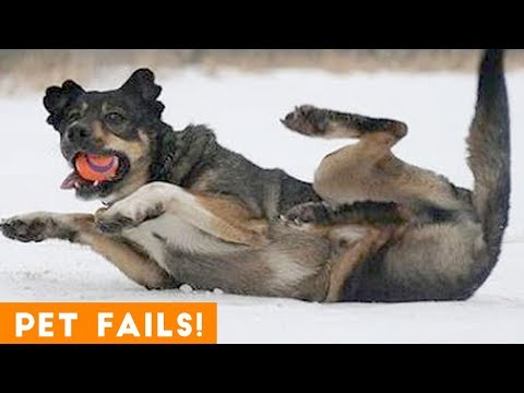 TRY NOT TO LAUGH at FUNNY PET FAILS 2018 | Funny Pet Videos