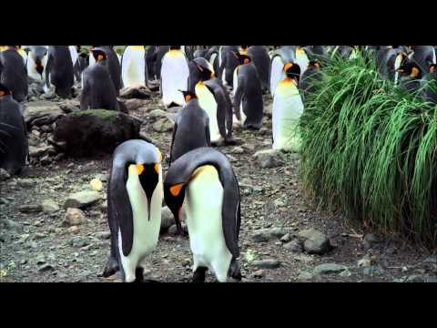 THE PENGUIN KING 3D TRAILER - In Cinemas From 24th October
