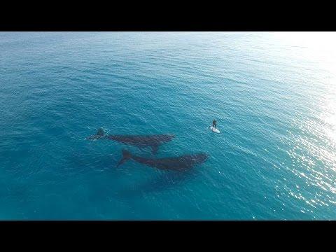 Paddle Boarding with Whales, Esperance Australia * Szörfös bálnákkal (Ausztrália)