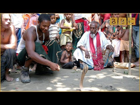 King Cobra Catcher - Tough Guy or Chicken - BBC Three