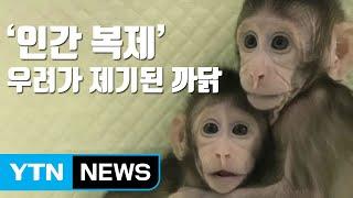 [자막뉴스] 중국, 세계 첫 '체세포핵치환' 원숭이 복제 / YTN
