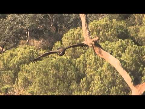 Vultures: Passion for carrion birds
