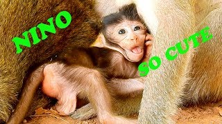 So Much Charming Face, Lovely & Cute Activity, Baby NINO|# Monkey Nightmare