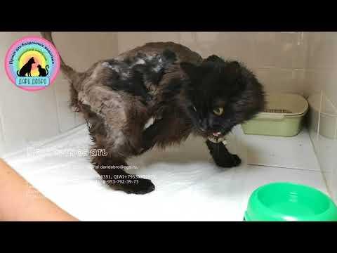 Лапа кота стала мумией ветеринары выясняют почему Спасаем вместе help the cat
