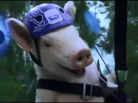 Geico Commercial -- Ziplining Pig Screams Wee video