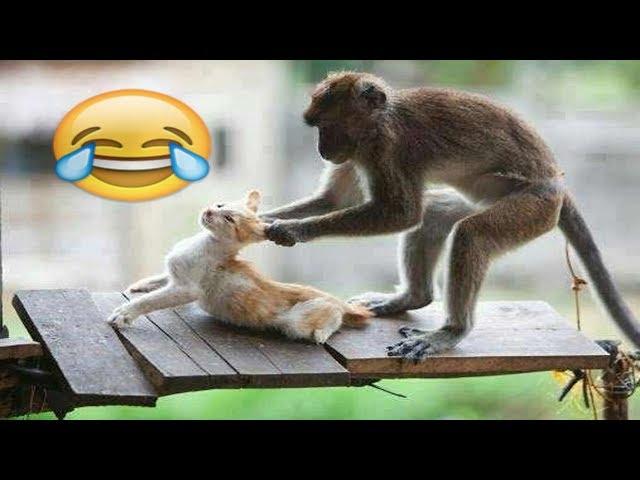 شاهد مضحك جدا جدا القرد سكرانة تعمل مشاكل القطط    MONKEYS Vs CATS   Funny Videos